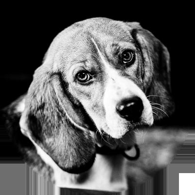 THE_DOG
